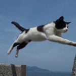 ねこ島って何?猫とアートで有名な男木島